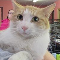 Adopt A Pet :: Phoebe - Reeds Spring, MO
