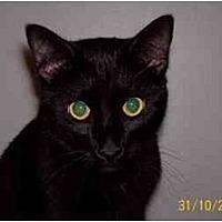 Adopt A Pet :: Tarzan - Garland, TX