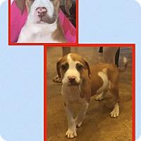Adopt A Pet :: Texas - Scottsdale, AZ