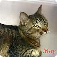 Adopt A Pet :: May - El Cajon, CA