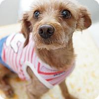 Adopt A Pet :: Sara - Richmond, BC