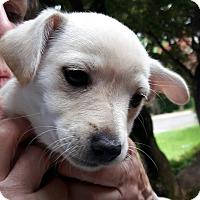 Adopt A Pet :: Riley - Salem, OR