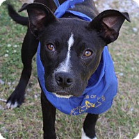 Adopt A Pet :: Beckham - Minneapolis, MN