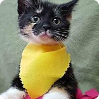 Adopt A Pet :: ADOPTED!!!   Meow Mix - Gahanna, OH