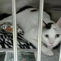 Adopt A Pet :: Cally - Myrtle Beach, SC