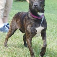 Adopt A Pet :: Serena - Clearfield, PA