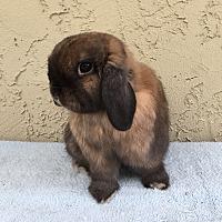 Adopt A Pet :: Gus - Bonita, CA