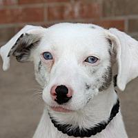 Adopt A Pet :: Sassy - Joliet, IL