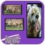 Photo 1 - Cocker Spaniel Dog for adoption in Hollywood, Florida - DIAMOND