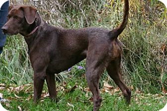 Tessa | Adopted Dog | Avon, NY | German Shorthaired ...