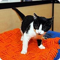 Adopt A Pet :: Pookie - Farmingdale, NY