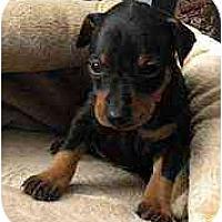 Adopt A Pet :: Halo - Minneapolis, MN