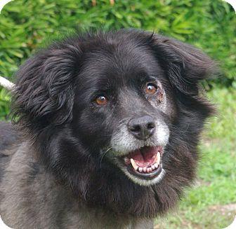 Border Collie Mix Dog for adoption in Daytona Beach, Florida - Mooki