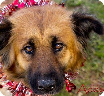 Chow Chow/Shepherd (Unknown Type) Mix Dog for adoption in Irmo, South Carolina - Addy