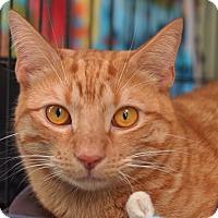 Adopt A Pet :: Tony - Brooklyn, NY