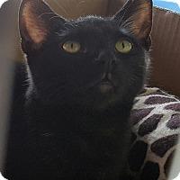 Adopt A Pet :: Yuri - Raritan, NJ