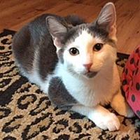 Adopt A Pet :: Lily - Courtesy Listing - Southlake, TX