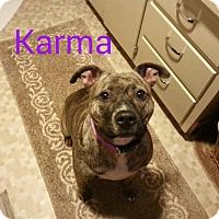 Adopt A Pet :: Karma (Courtesy Post) - Upper Sandusky, OH