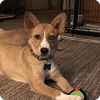 Adopt A Pet :: Lucy - Middlesex, NJ