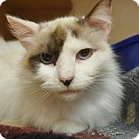 Adopt A Pet :: Fifi - Kettering, OH
