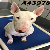 Adopt A Pet :: ROCKY - San Antonio, TX