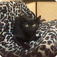 Adopt A Pet :: Tar - Tampa, FL
