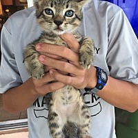 Adopt A Pet :: Scout - Fort Lauderdale, FL