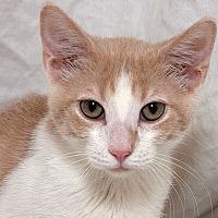 Adopt A Pet :: Doug W - Sacramento, CA