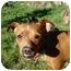 Photo 1 - Pug/Boxer Mix Dog for adoption in Castro Valley, California - Bruiser