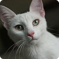 Adopt A Pet :: Claudette - Canoga Park, CA