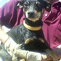 Adopt A Pet :: Coco - Childress, TX