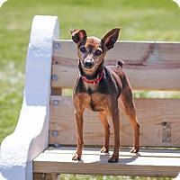 Adopt A Pet :: Rocky - Syracuse, NY