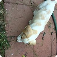 Adopt A Pet :: Jill - Richmond, VA
