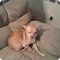 Adopt A Pet :: PIXIE(COURTESY POST) - Upper Sandusky, OH