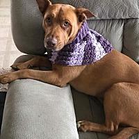 Adopt A Pet :: Lou Lou - Romoland, CA