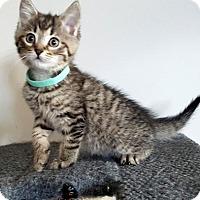 Adopt A Pet :: Lincoln - Richmond Hill, ON