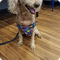 Adopt A Pet :: Zaida - Alpharetta, GA