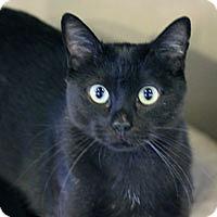 Adopt A Pet :: Jacklyn - Pacific Grove, CA