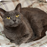 Adopt A Pet :: Ginny - Fountain Hills, AZ