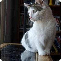 Adopt A Pet :: Tweek - Alexandria, VA