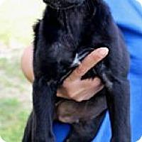 Adopt A Pet :: Austin - Silsbee, TX