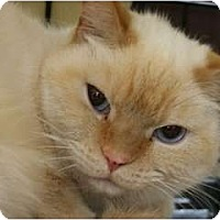 Adopt A Pet :: Laney - Frederick, MD