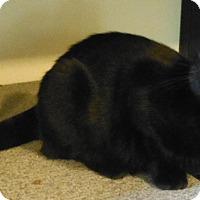Adopt A Pet :: Luke - Edmonton, AB
