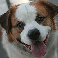 Adopt A Pet :: Weston - Canoga Park, CA