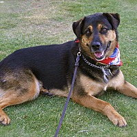 Adopt A Pet :: Handsome Shadow-VIDEO - Burbank, CA
