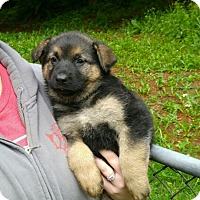 Adopt A Pet :: Charlotte*ADOPTION PENDING* - Mill Creek, WA