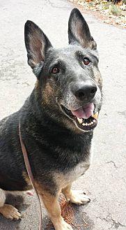 German Shepherd Dog Mix Dog for adoption in Lincoln, California - Gunner