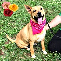 Adopt A Pet :: Ember Lou - Arlington, VA