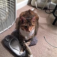 Adopt A Pet :: Cheddar - Athens, GA