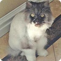 Adopt A Pet :: Burton - Davis, CA